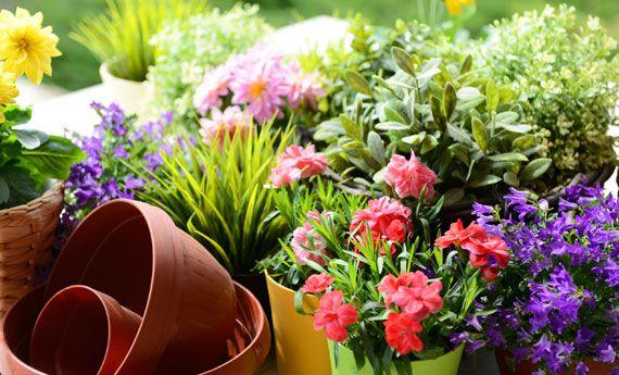 I fiori di maggio: quali fioriscono e quali coltivare | I sempreverdi