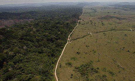 """Destruction of the Amazon rainforest has increased by almost one-third in the past year, reversing a decade-long trend of better protection for the world's greatest rainforest. Environmentalists blamed a controversial weakening of legal protections passed by President Dilma Rousseff for the increase in deforestation by loggers and farmers. But the environment minister, Izabella Teixeira, rejected this, saying the overall trend was """"positive""""."""