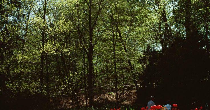 Los mejores bordes para impedir el crecimiento de césped en los canteros de flores