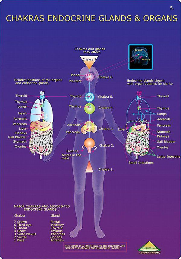 Understanding the Chakras using science. Each Chakra in the body corresponds to an endocrine gland, and each endocrine gland regulates and secretion of hormones, the chemicals responsible for many different emotions and sensations in the body.