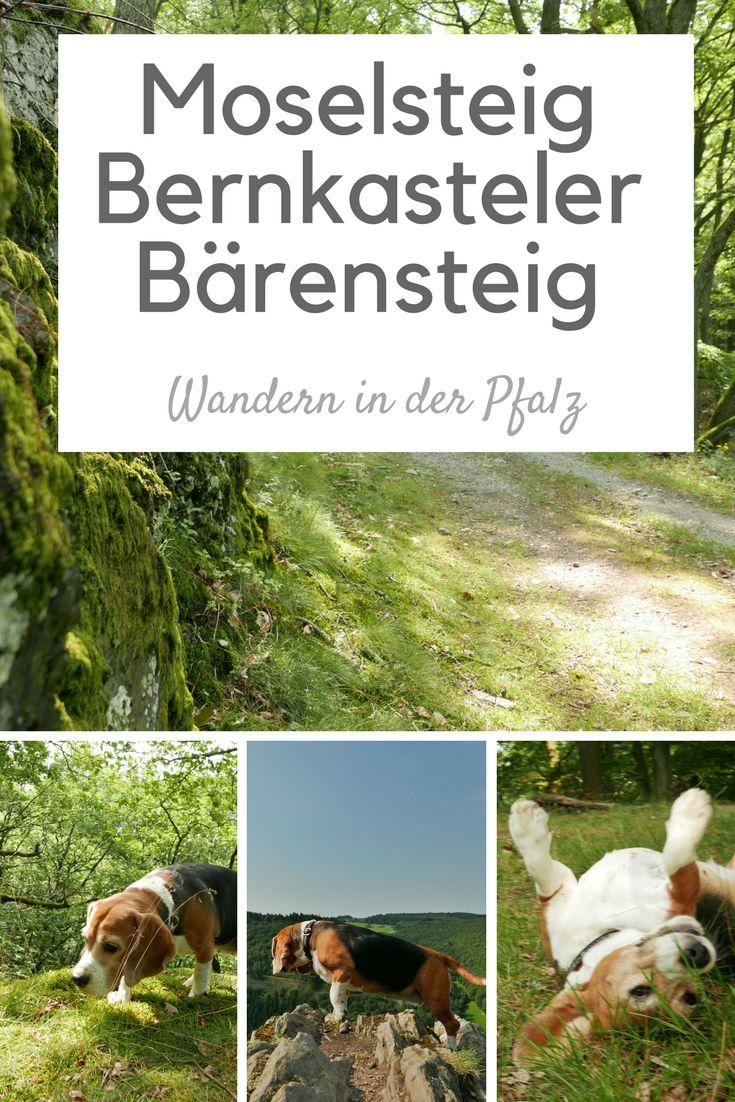 Wanderung in der Pfalz auf dem Seitensprung Moselsteig Bernkasteler Bärensteig #Pfalz #Rheinland-Pfalz #rlp #wandern #mosel #wanderung #seitensprung
