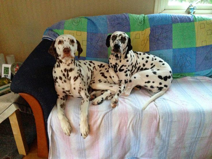 Punktesturm: Hunde und Katzenpension als Pflegestelle
