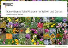 Bienenlexikon – Übersicht bienenfreundlicher Pflanzen (plants to attract bees)