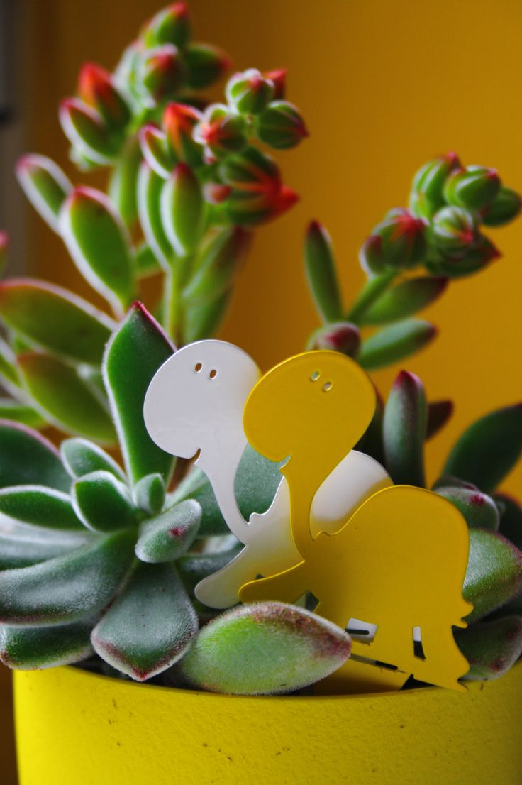 """Turtles duet"", whie and yellow 