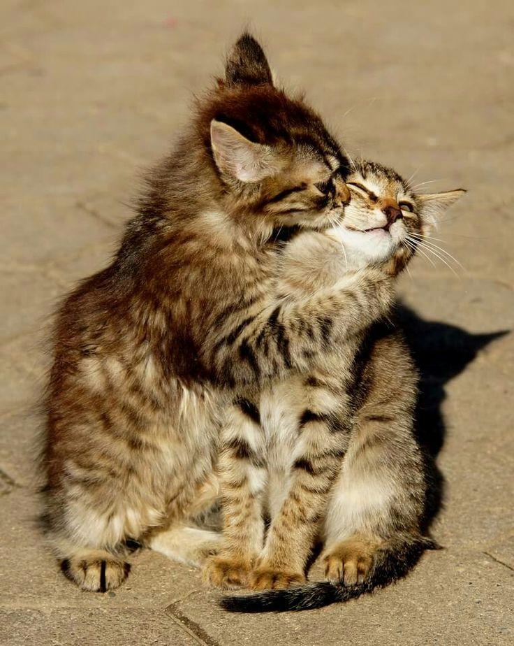 Even kitties force lovins
