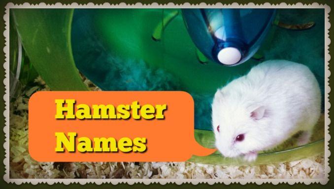 cute hamster names