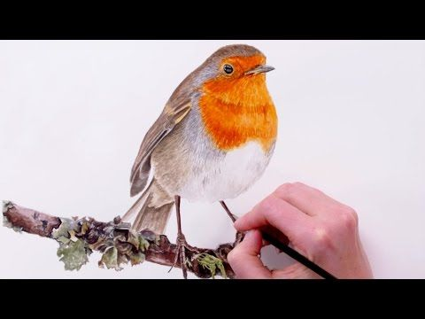 Anna Mason - how to paint a robin with watercolor