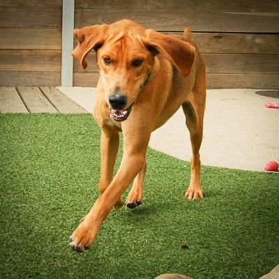Animal profile Boomer Shelter dogs, Pets