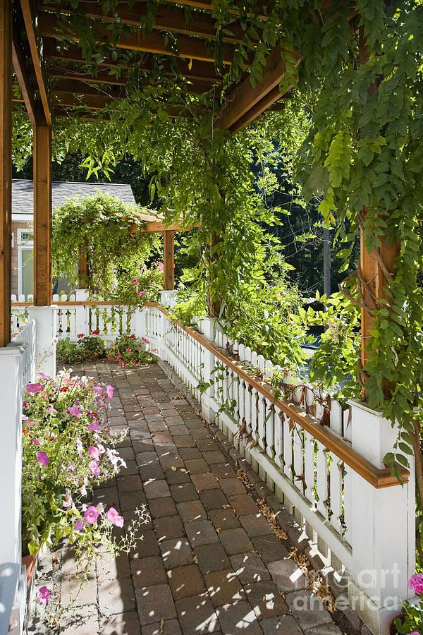Plant-covered Walkway