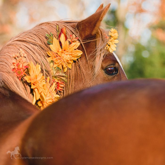 arabian horse flowers in mane