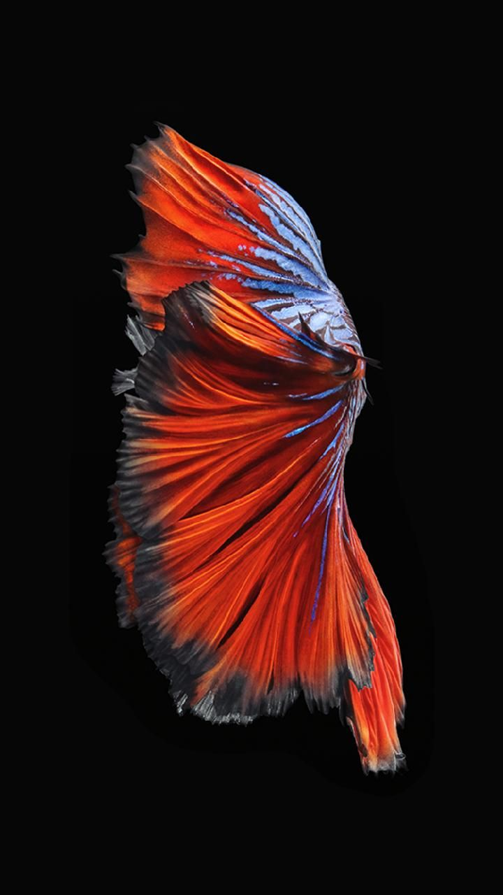 Iphone 6s And Iphone 6s Plus Dark Wallpaper Live Wallpaper Iphone Live Fish Wallpaper Fish Wallpaper