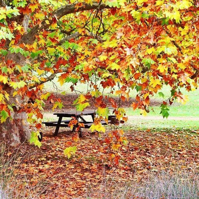 Beautiful autumn.