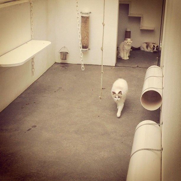 PVC tubes attached to the wall. You can put shelves just above them, for display or for cats to play. Salatino's Cattery