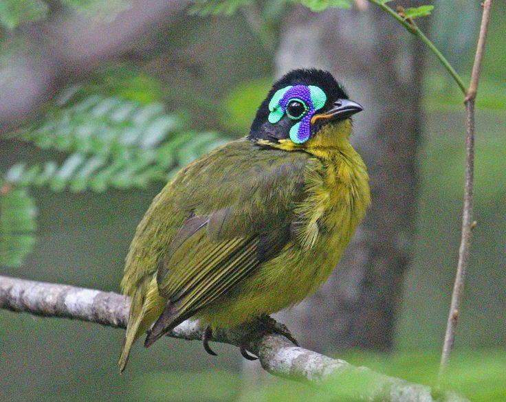 Садовые птицы фото и названия она известная