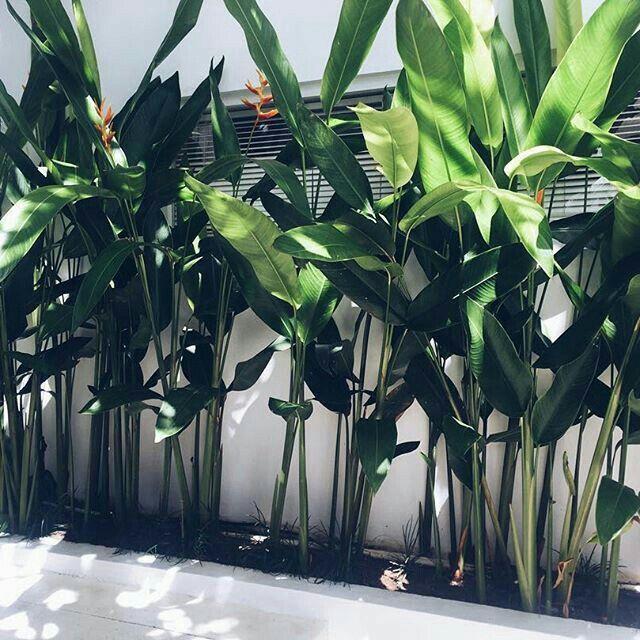 Tropical Backyard Ideas Australia: 10 Best Wire Trellis Images On Pinterest