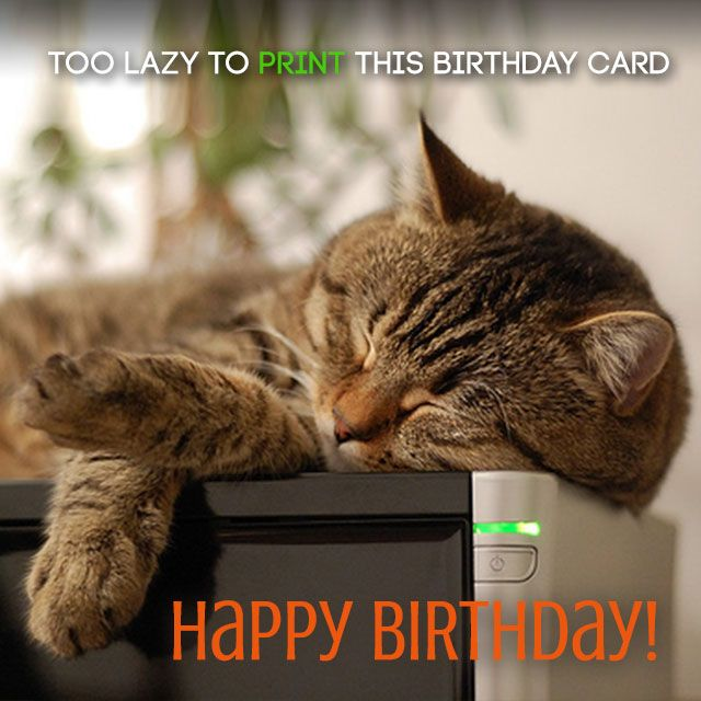 Happy Birthday Cat Wishes: 134 Best Images About Funny Birthday Wishes On Pinterest