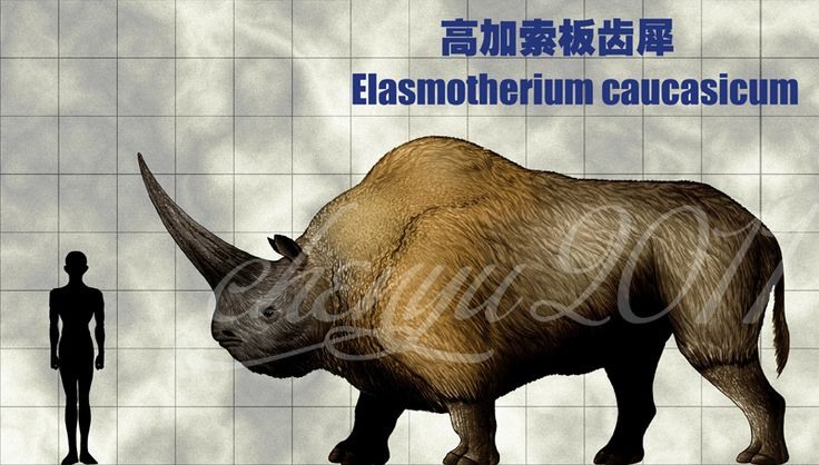 geology species woolly mammoth paper The largest elephant that ever lived was huge, taller than your two-story mayfair flat and almost as tall as the average telephone pole evolved from smaller siberian mammoths, the songhua river mammoth roamed northern china and inner mongolia during the middle pleistocene about 280,000 years ago.