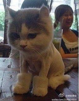장화신은 고양이 실사판