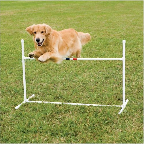 Rugby Dog Agility Show: 616 Best Images About Dog Agility On Pinterest