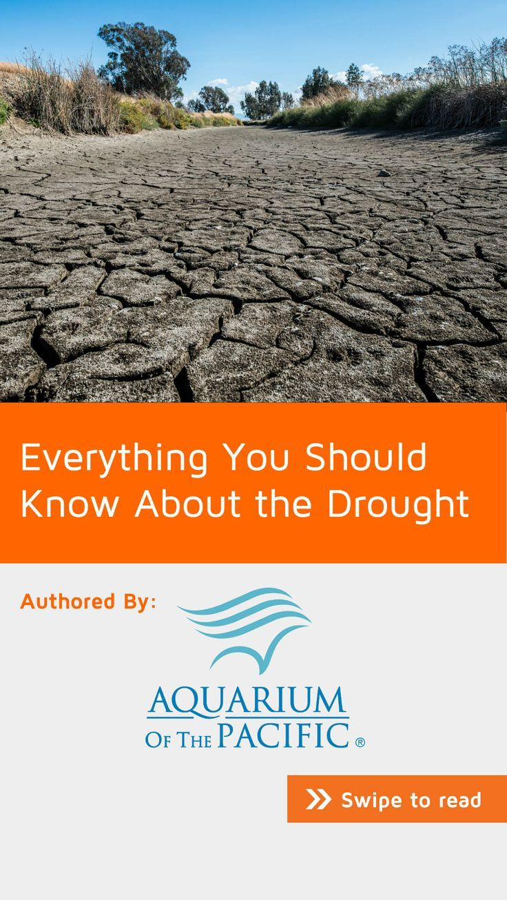 Drought is a regular, natural occurrence in California. Based on tree ring records for the last 1,300 years, scientists know that two mega-droughts much longer and more severe than the current one occurred in what is now the American West. Experts say water scarcity and a culture of conservation will be the new normal—and research and technology can help us evolve and prepare. Find out how. #NoteStream #nature. Download now for free.