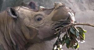 Liste des animaux sauvages menacés d'extinction
