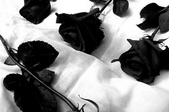 Imagenes de duelo con rosas negras