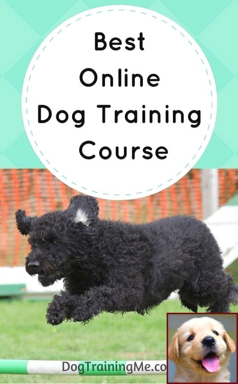 House Training A Puppy For Dummies And Dog Training Course Uk