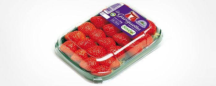 Fraise Gariguette : Savéol, producteur tomate et maraîcher   Savéol