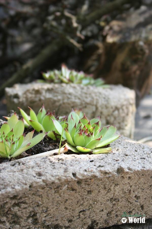 39 best Garten \ Pflanzen images on Pinterest Decks, Yard - gartenplaner freeware deutsch