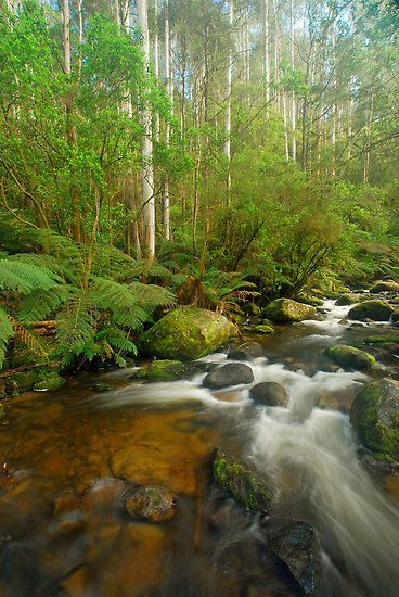 East Gippsland Victoria Australia by Janette Rodgers
