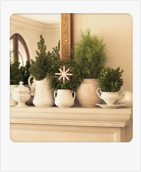 green and white mantle