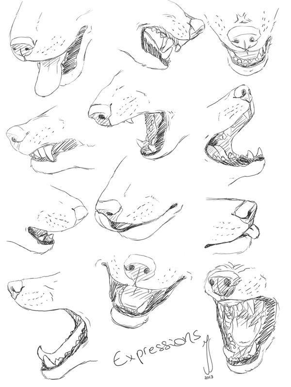 Schritt Für Schritt Zeichnen Tiere - Tier Malen