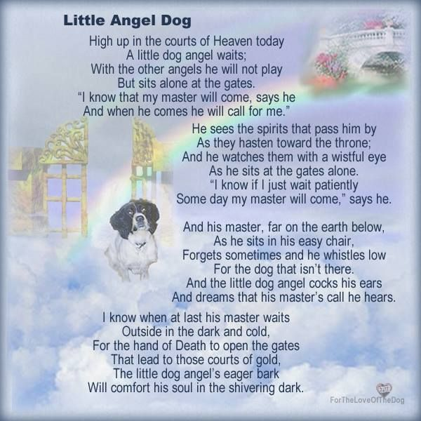 Dog Angel Quotes: 117 Best My Beloved Dog, Rip.. Images On Pinterest