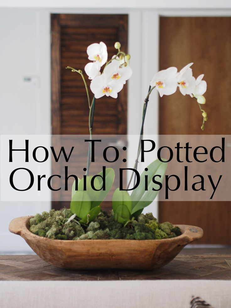 How To Potted Orchids Displayed In A Dough Bowl Typical