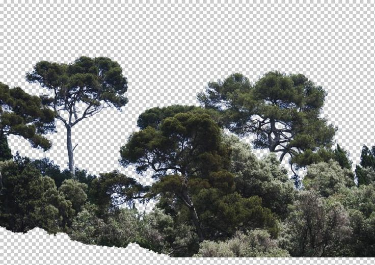 view from France by Gobotree, including cutout plants, tree, vegetation