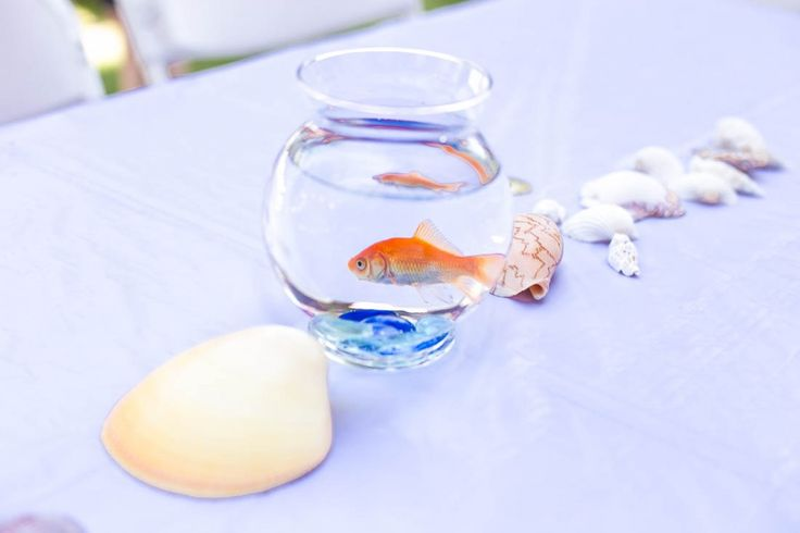 1000+ ideas about Goldfish Centerpiece on Pinterest