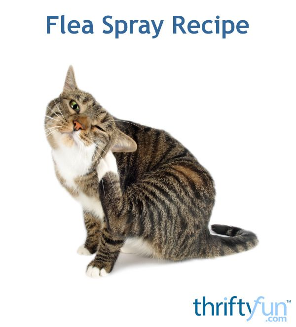 This is a guide about homemade flea spray recipe. Using household products you can make an effective flea spray.