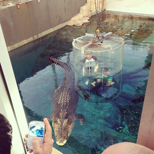 You can swim with a HUGE crocodile at Crocosaurus Cove in Darwin, NT. http://www.crocosauruscove.com/cage-of-death/