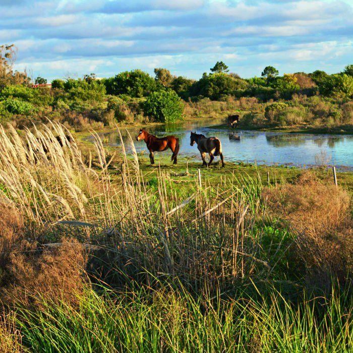 Uruguay : à Punta Ballena la pampa longe la mer