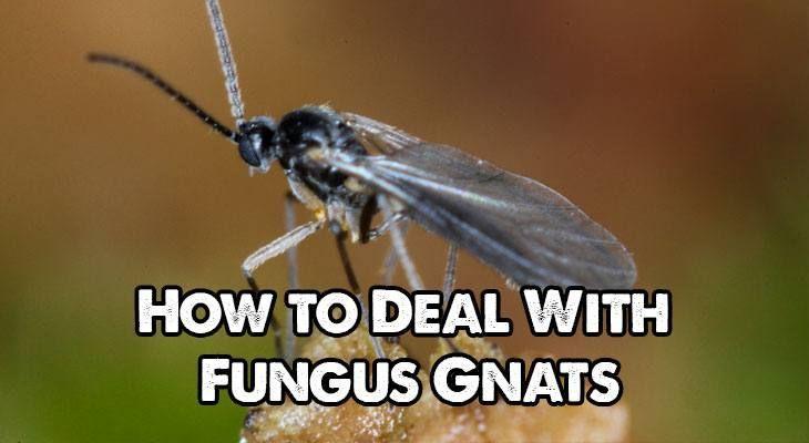 17 Best Images About Garden Pests On Pinterest Asparagus