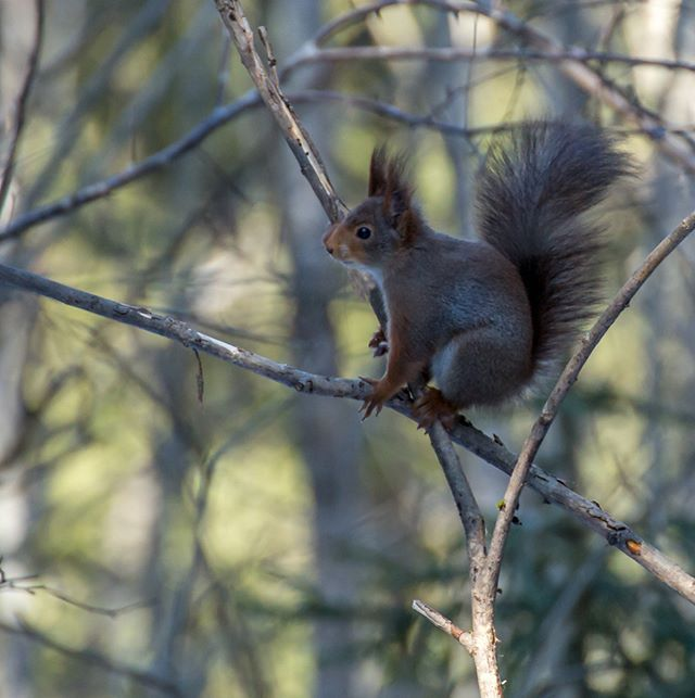 #squirrel#nature#forest#color