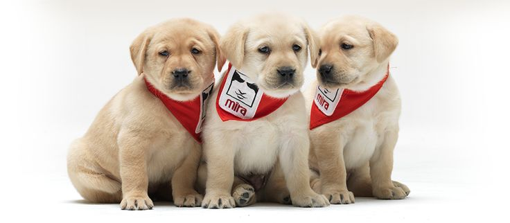 MIRA Foundation USA | Guide Dogs for the Blind | Blind Children Guide Dog