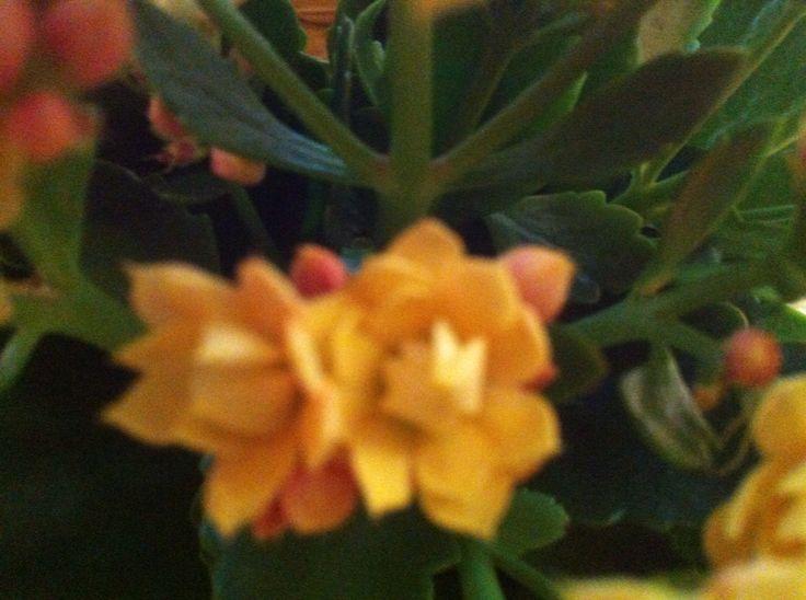 Fajne kwiatki