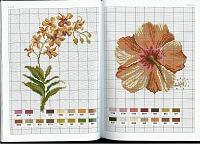 Gallery.ru / logopedd - Альбом Fleurs Vqariations - Mango Pratique