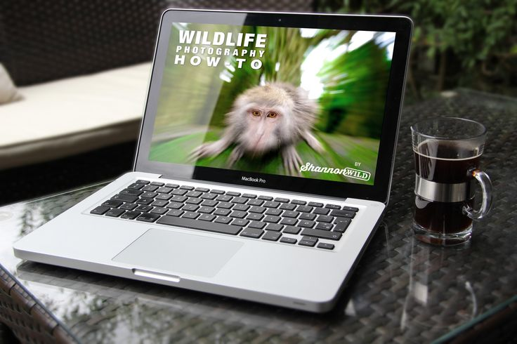 Wildlife Photography How-To E-Book Buy at - www.shannonwild.com