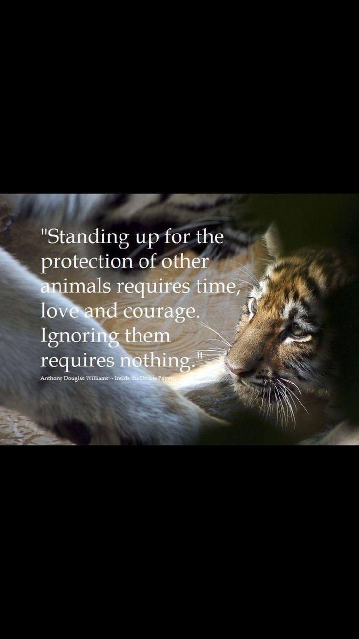 Animal Abuse Quotes 166 Best Travel  Tourist  Animal  Consciousness Images On