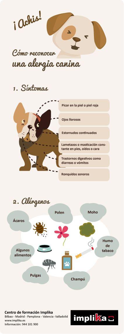 Cómo detectar una #alergia en #perros, contenido del Curso de Auxiliar #Veterinario de #Implika