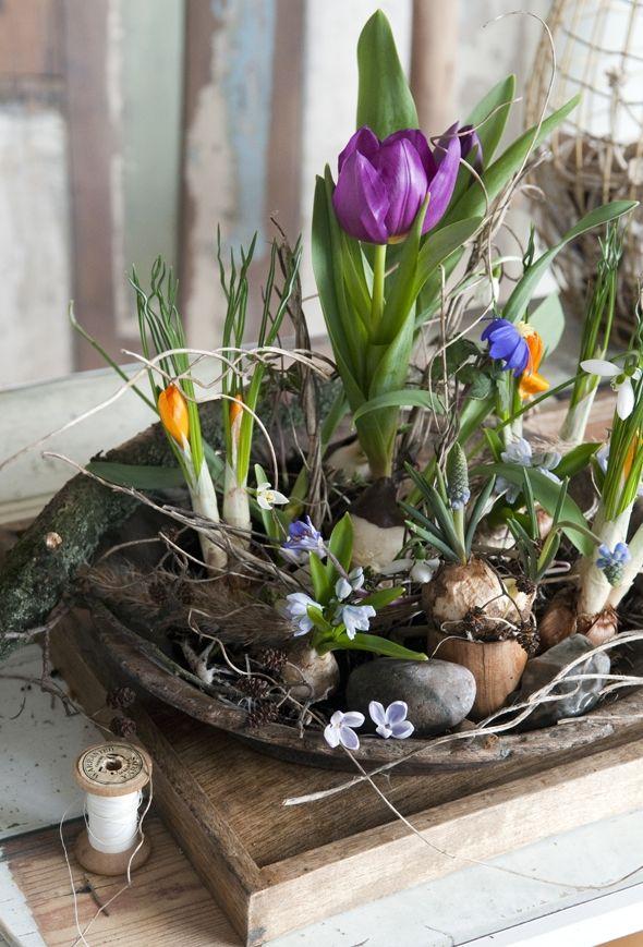 Byd forårets blomstrende grene og løgplanter indenfor i vaser, potter og søde æsker. Vi har sluppet fantasien løs og kreeret en håndfuld søde sammenplantninger, du nemt kan gøre efter selv.
