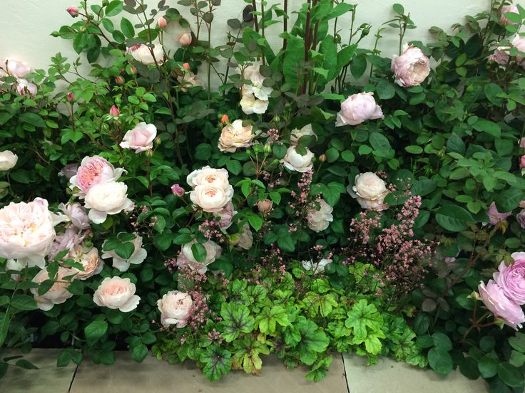 Design Ideas For Your Rose Garden: Companion Planting. Mix Pink English  Roses With Heuchera