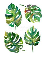 Split Leaf Philodendron watercolor on white background vector,illustration EPS10